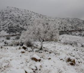 שלג צילום: פלאש 90