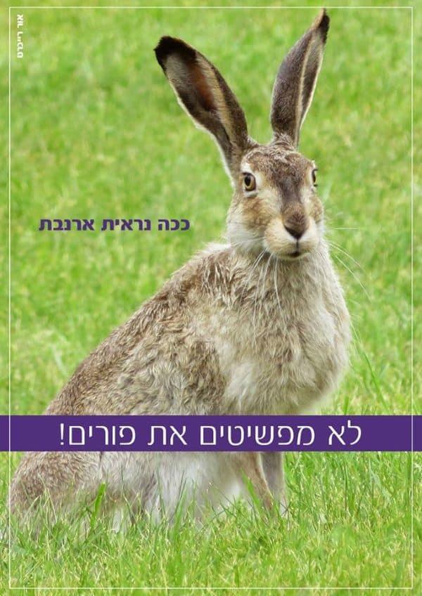 ארנבת זו ארנבת