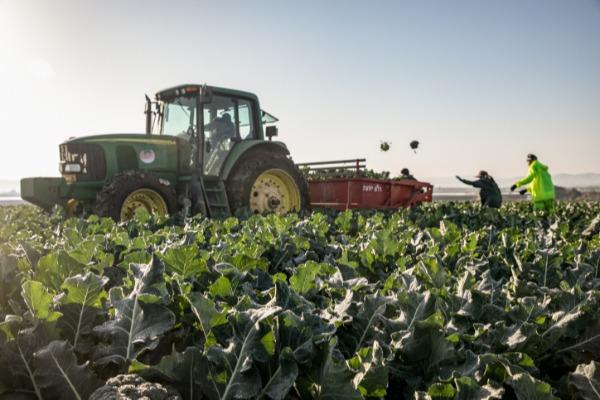 סובלים מטרור חקלאי