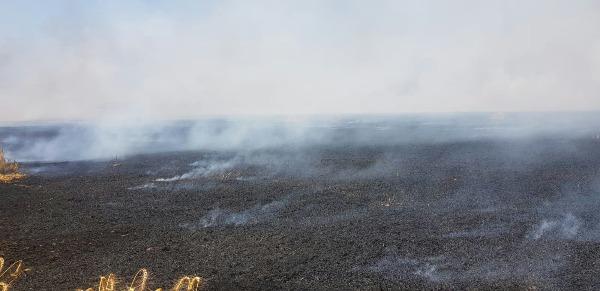שדה חיטה שנשרף ליד סעד בעקבות עפיפון תבערה