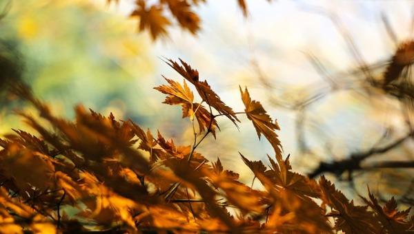 הסתיו נראה באופק