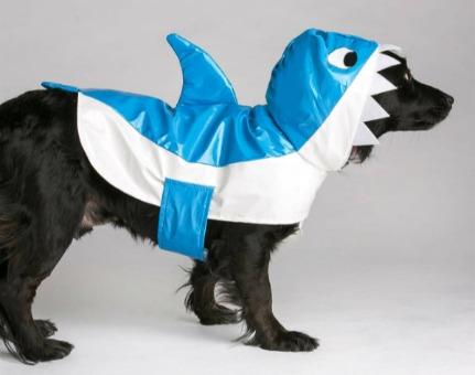 תחפושת כריש