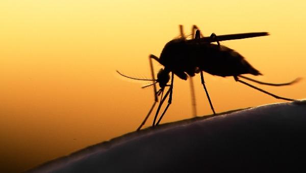 יתושים בירושלים