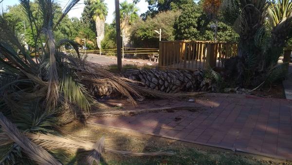 העץ שקרס