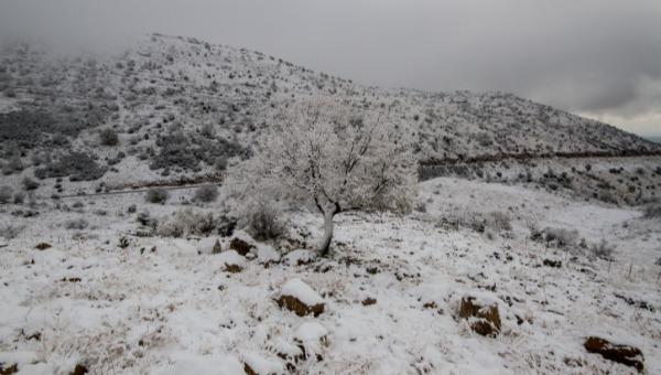 שלג. ארכיון
