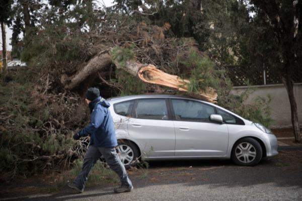 עץ שקרס על רכב. ארכיון