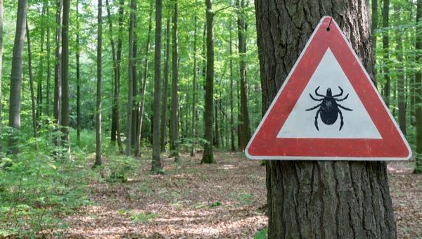 אזהרה מקרציות ביער באירופה