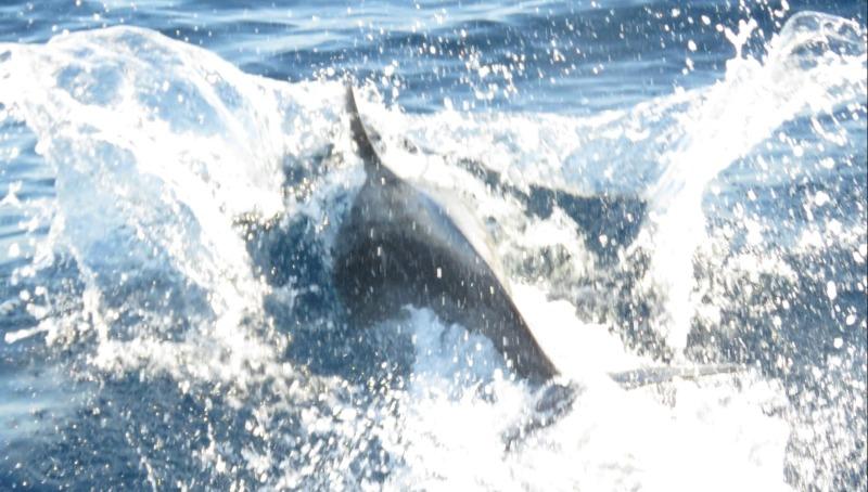 הדולפינים מול ראש הנקרה