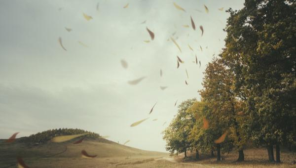 רוח בסתיו