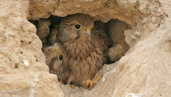 שילוח הקן