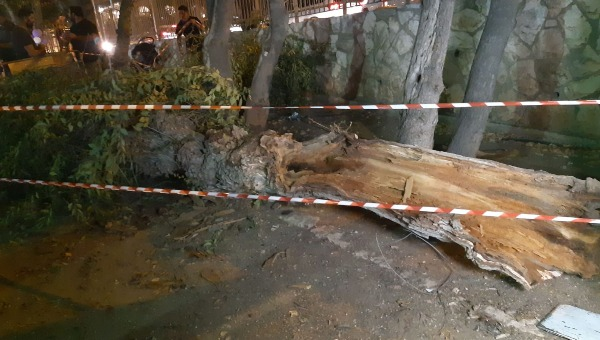 העץ שנפל