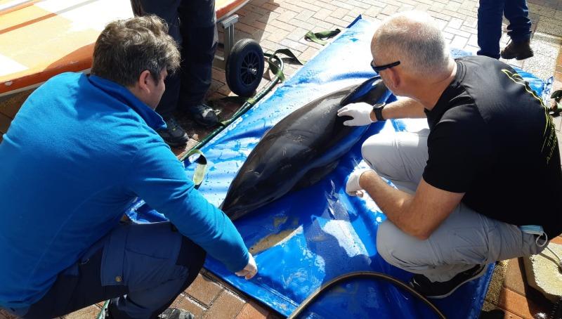 גופת הדולפין
