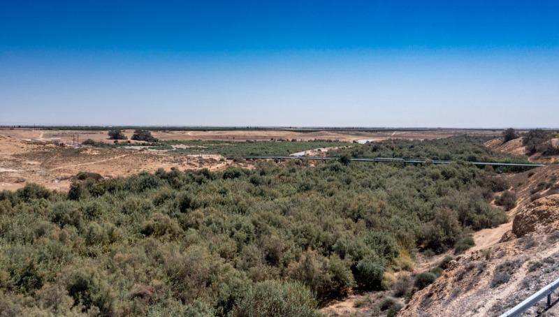 תזהרו מעקיצות: יתושים נגועים בנגיף קדחת מערב הנילוס התגלו בנחל הבשור