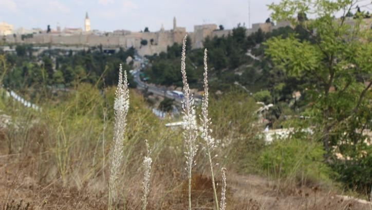 אחרי החום - הגשם באופק. סתיו ישראלי