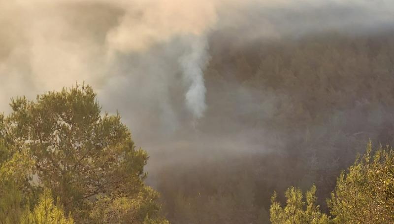 השריפה בפארק בגין: ממצאים מעידים על הצתה מכוונת