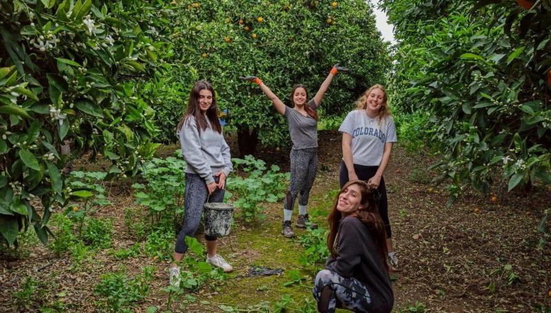 בני נוער מתנדבים בחקלאות